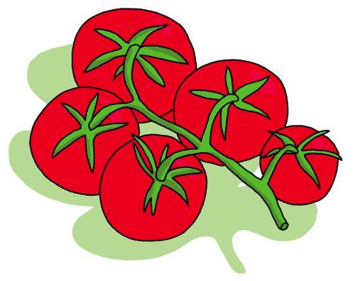 Blog tomate juillet 09