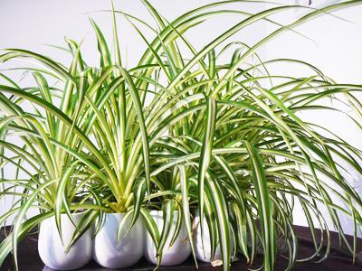 Plante Appartement Facile le blog des paresseuses: 5 plantes pour travailler sa main verte